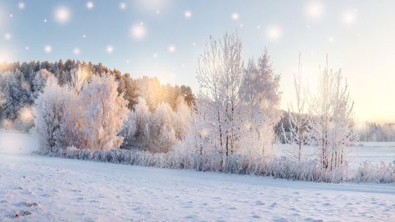 不可思议的圣诞节自然在早晨 与温暖的阳光照亮的雪的树 冬天与落的雪花的自然风景 免版税库存照片