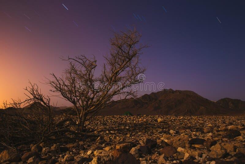 不可思议的夜在以色列Neqev沙漠 星发光 免版税库存照片