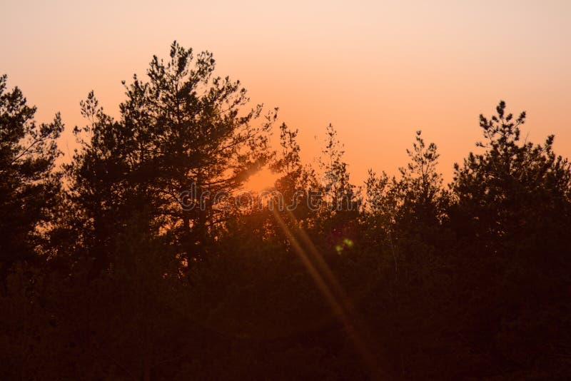 不可思议的平衡的光在森林 免版税库存照片