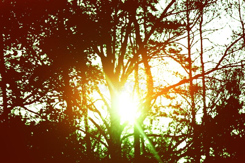不可思议的平衡的光在森林 库存照片