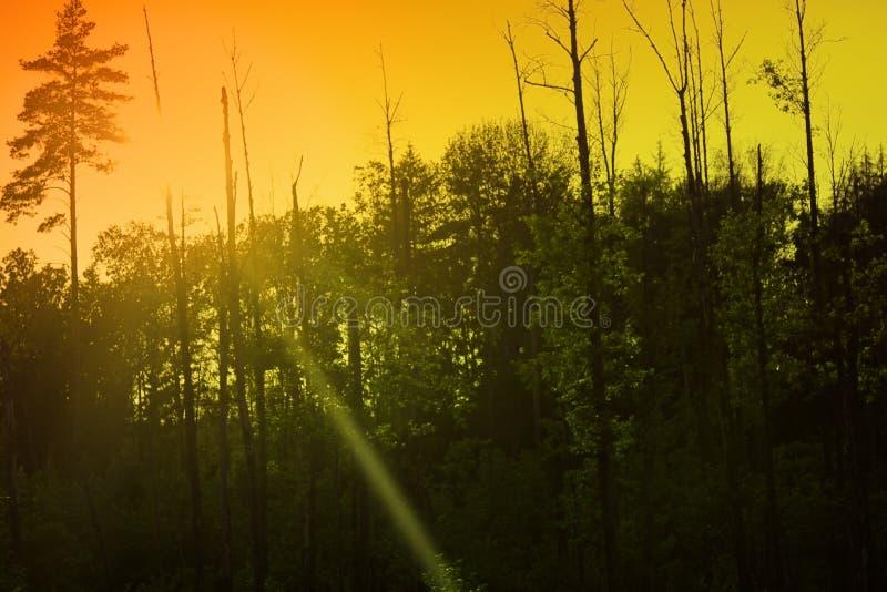 不可思议的平衡的光在森林 免版税库存图片