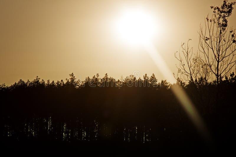 不可思议的平衡的光在森林 图库摄影