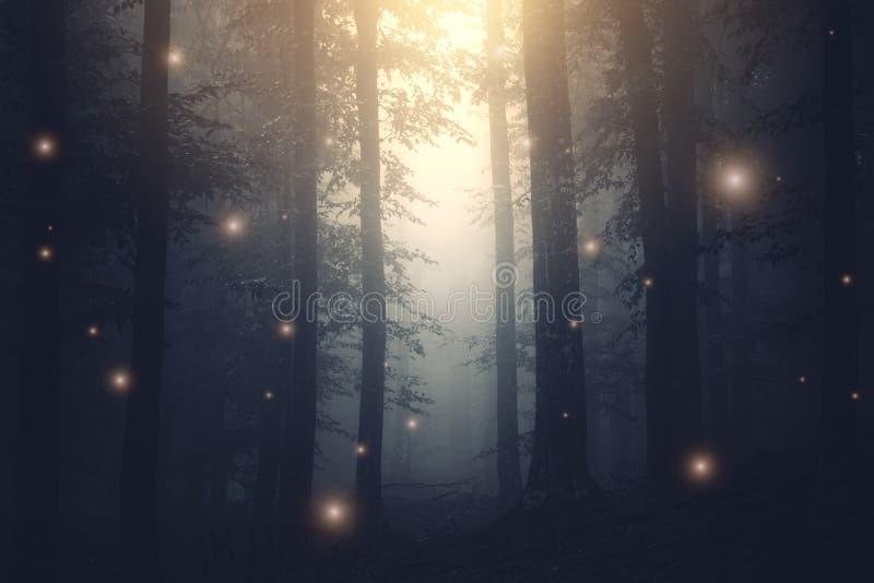 不可思议的幻想彩色小灯在有雾的被迷惑的森林里 免版税图库摄影