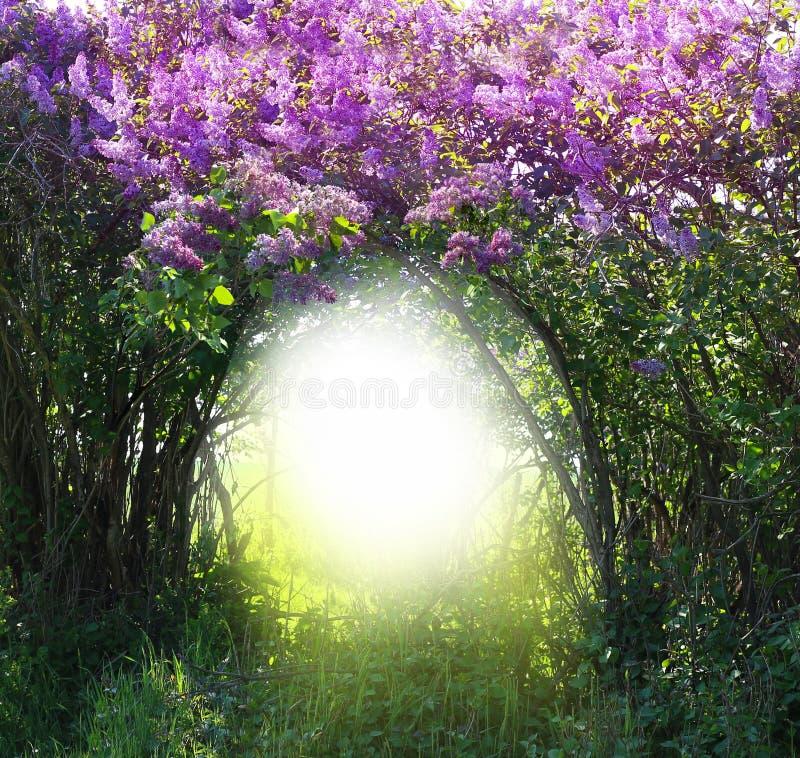 不可思议的春天森林风景 免版税库存照片
