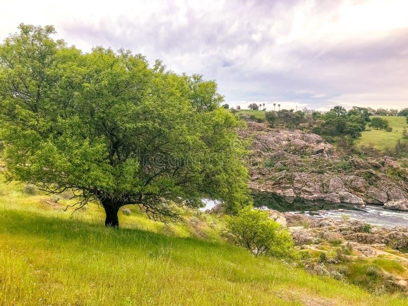 不可思议的树在草甸 库存照片