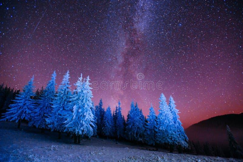 不可思议的树在满天星斗的冬天夜 图库摄影