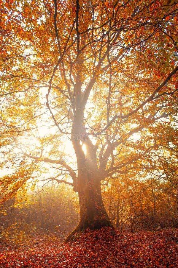 不可思议的树 免版税图库摄影