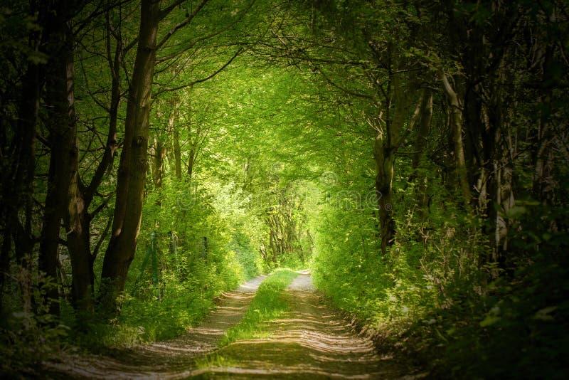 不可思议的森林道路 库存图片