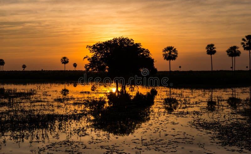 不可思议的金黄日落在潘塔纳尔湿地沼泽地在巴拉圭 图库摄影
