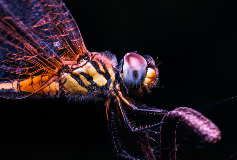不可思议的蜻蜓 免版税库存照片
