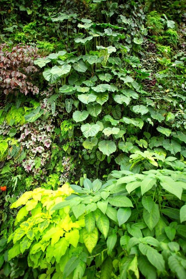不同植物的绿色热带花园 库存图片