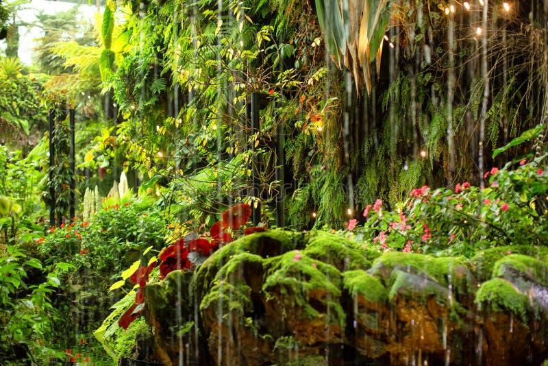 不同植物的绿色热带花园 库存照片