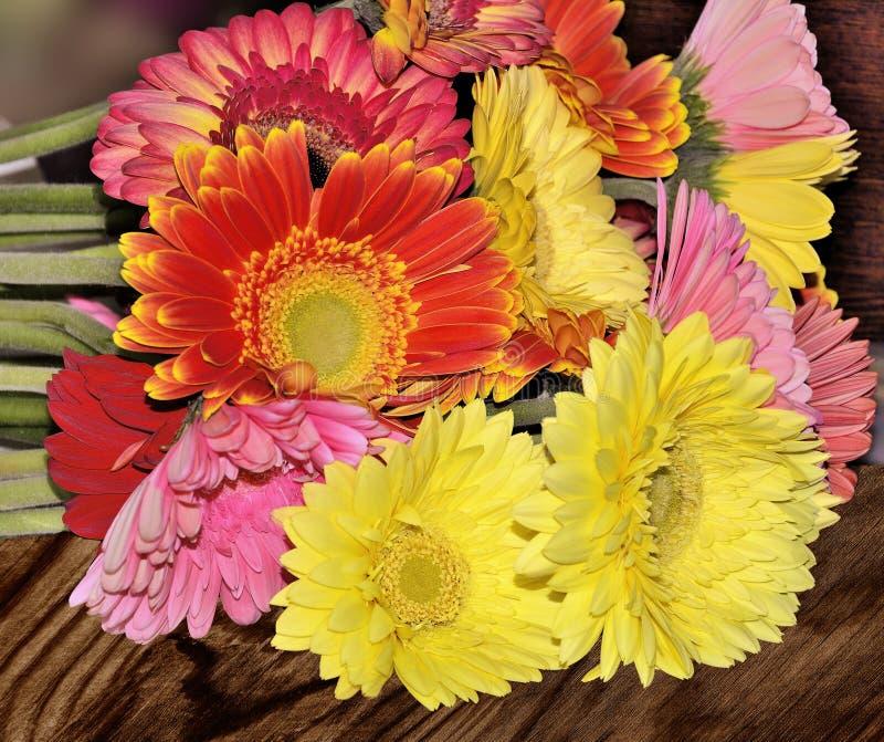 不同的五颜六色的大丁草花束在木后面关闭  库存照片