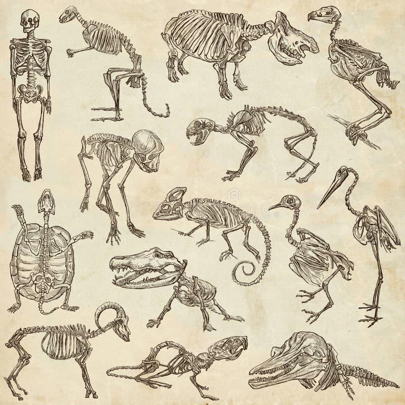 不同的动物- freehands的骨头和头骨 库存例证