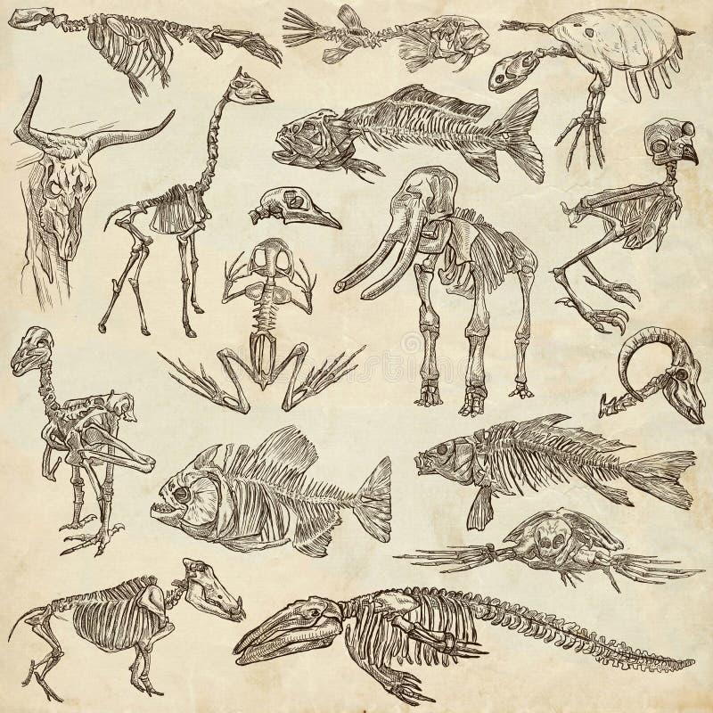 不同的动物- freehands的骨头和头骨 向量例证