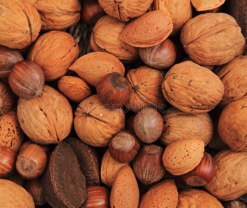 不同的坚果和杏仁 免版税库存照片