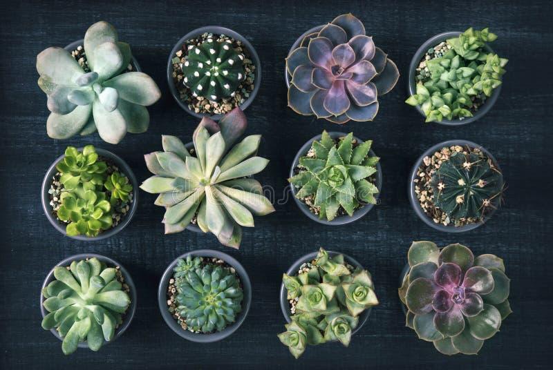 不同的多汁植物 免版税库存图片