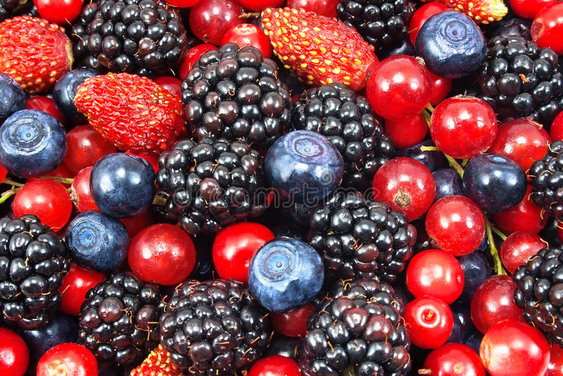 不同的新鲜的浆果 库存照片