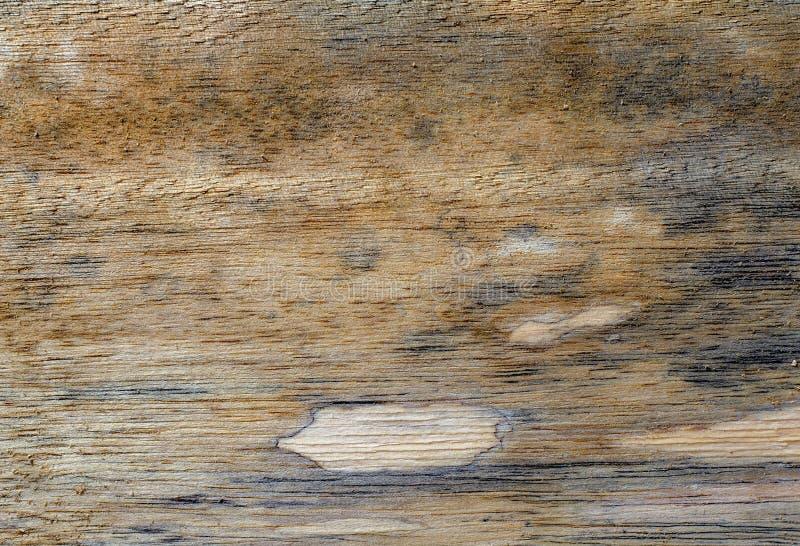 不同的木纹理和背景III 图库摄影