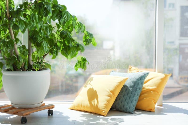 不同的枕头临近窗口 库存图片