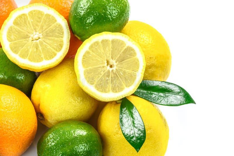 不同的柑橘水果的汇集 库存照片