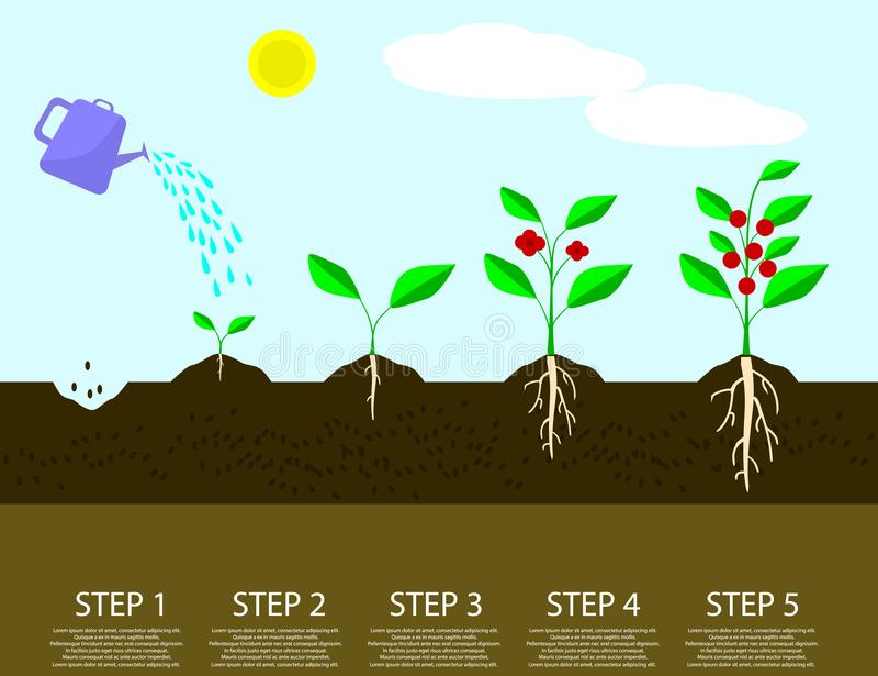 不同的步生长植物 种植树处理infographic 皇族释放例证
