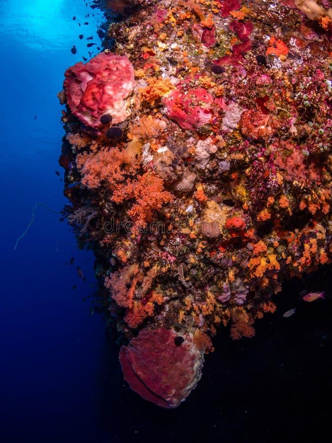 不同的热带珊瑚礁 库存照片