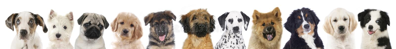 不同的狗的面孔 免版税库存图片