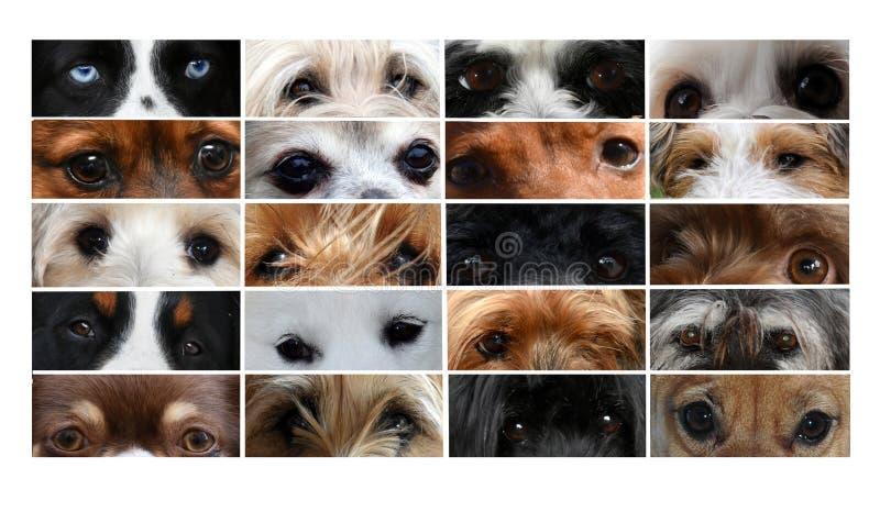 不同的狗眼睛拼贴画  图库摄影