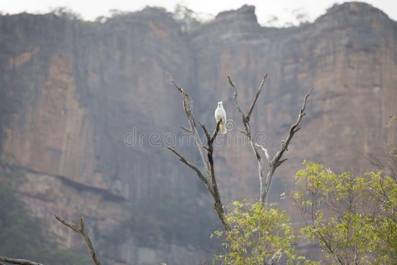 不同的种类在一棵分支树的鸟在澳大利亚 免版税库存照片