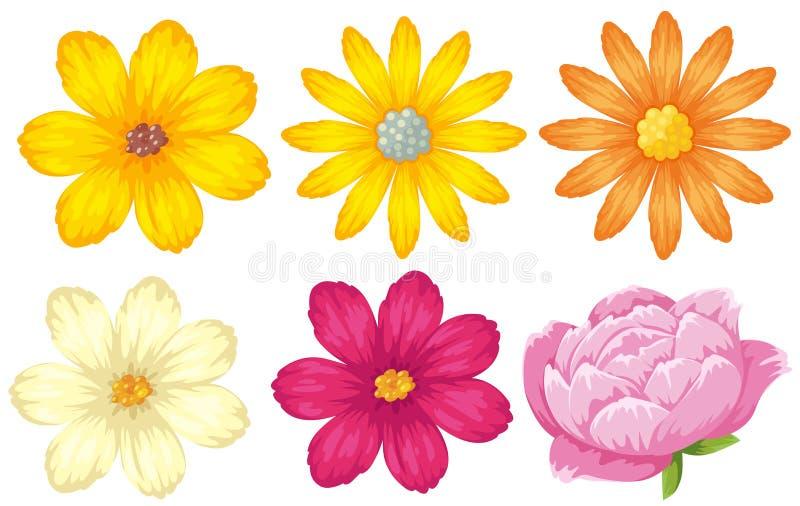 不同的种类花以黄色和桃红色 向量例证