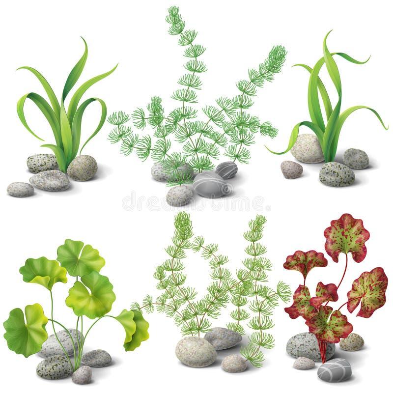 不同的种类海藻集合 库存例证