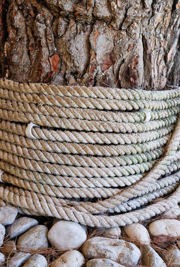 不同的纹理;在树附近的绳索创伤与粗砺的吠声 免版税图库摄影