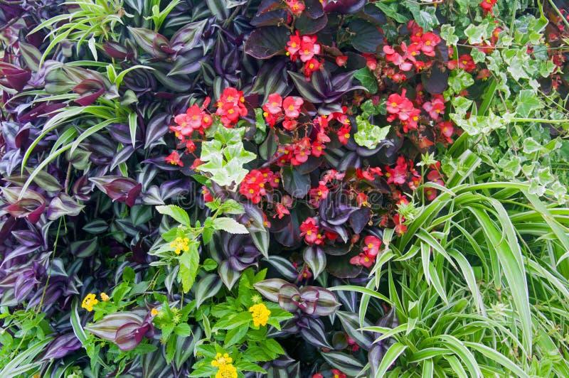 不同的绿色植物和花的混合 免版税库存照片