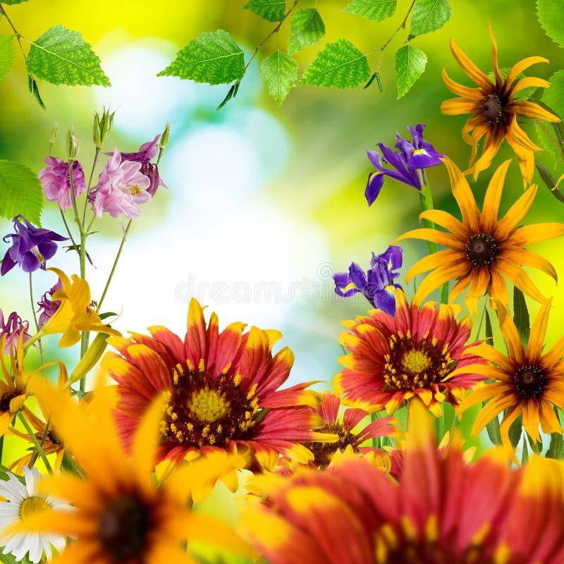 不同的美丽的花在庭院里 免版税库存图片