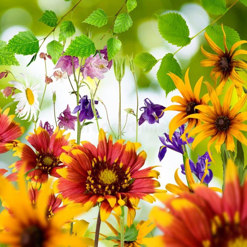 不同的美丽的花在庭院里 免版税库存照片