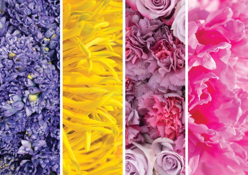 不同的花和植物的拼贴画图片 图库摄影