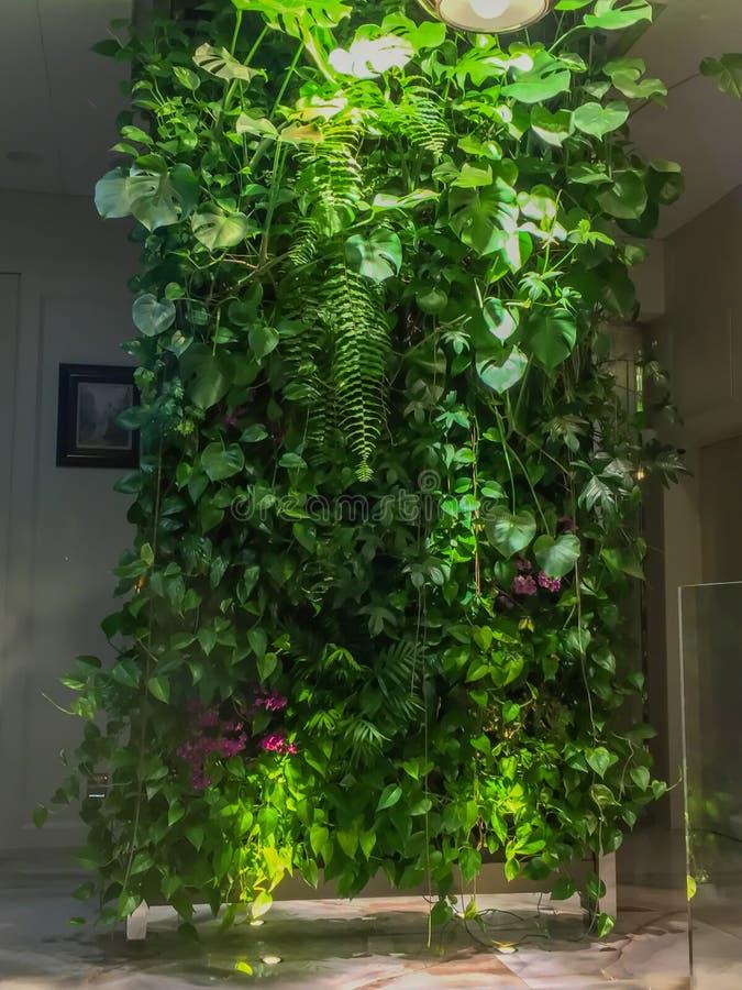 不同的落叶植物绿色墙壁内部decorat的 免版税库存照片