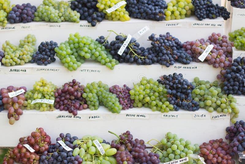 不同的葡萄的分类 图库摄影