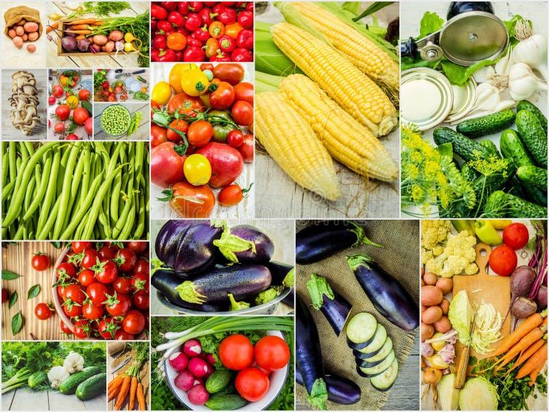 不同的蔬菜拼贴画 素食食物 库存图片