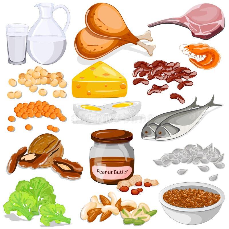 不同的蛋白质来源食物汇集 皇族释放例证