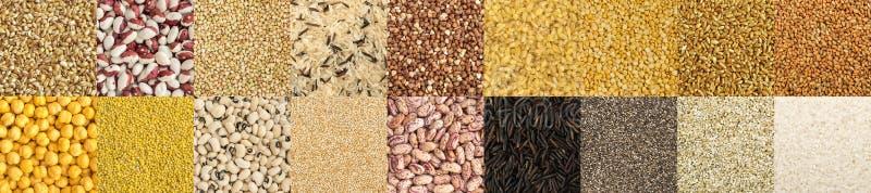 不同的谷物和可食用种子的大收藏 图库摄影