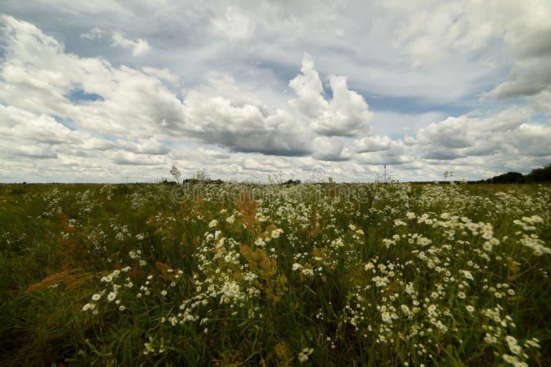 不同的野花和美丽的天空云彩豪华的绽放  夏天风景在一好日子 免版税库存照片