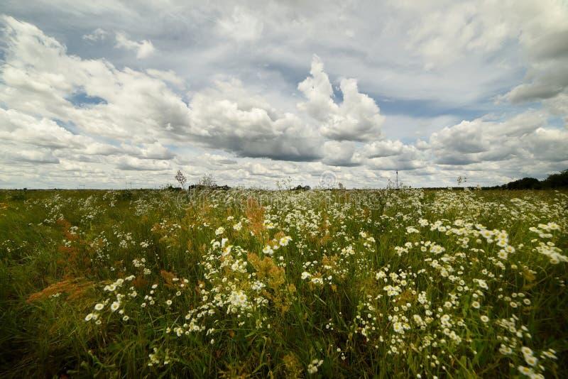 不同的野花和美丽的天空云彩豪华的绽放  夏天风景在一好日子 免版税库存图片
