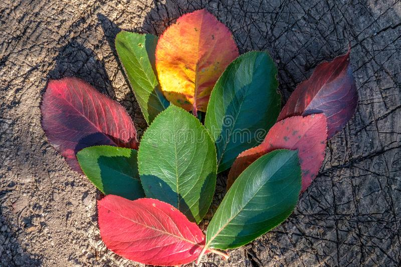 不同的颜色秋叶在一个老树桩说谎 免版税库存照片