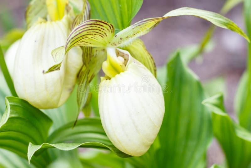 不同的颜色美丽的兰花在绿色背景的在庭院里 免版税库存照片