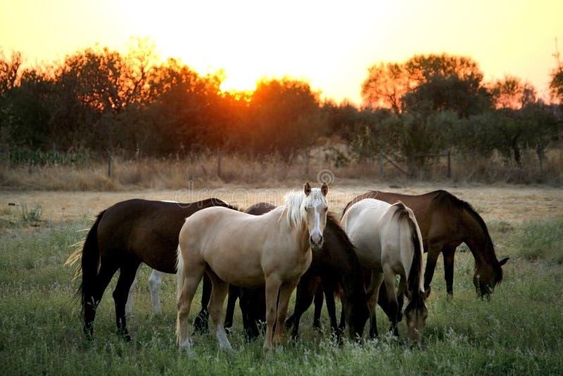 不同的颜色野马  葡萄牙- Alen的国家边 库存图片