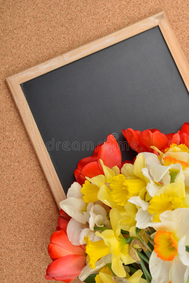 不同的黄水仙和红色和黄色郁金香花束在blan 免版税图库摄影