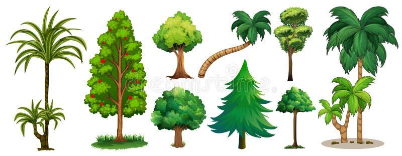 不同的结构树类型 库存例证