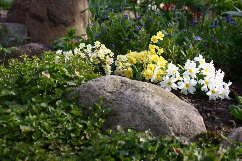 不同花瓣的花床 免版税库存照片